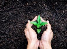 Klein plantje in de grond